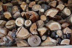 Holz: Rohstoff - Lebensraum - Werkstoff